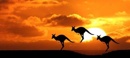 australijazemlja_kengura_1