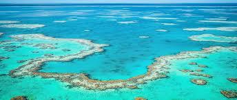 koralj 1