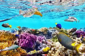 koralj 2