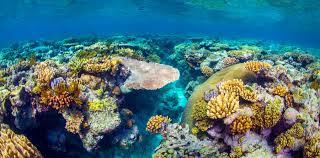 koralj 4