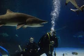 swimm with sharks